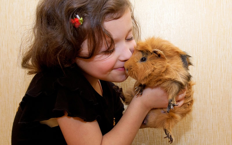10 Best Pet Recommendations for Kids | ChildFun