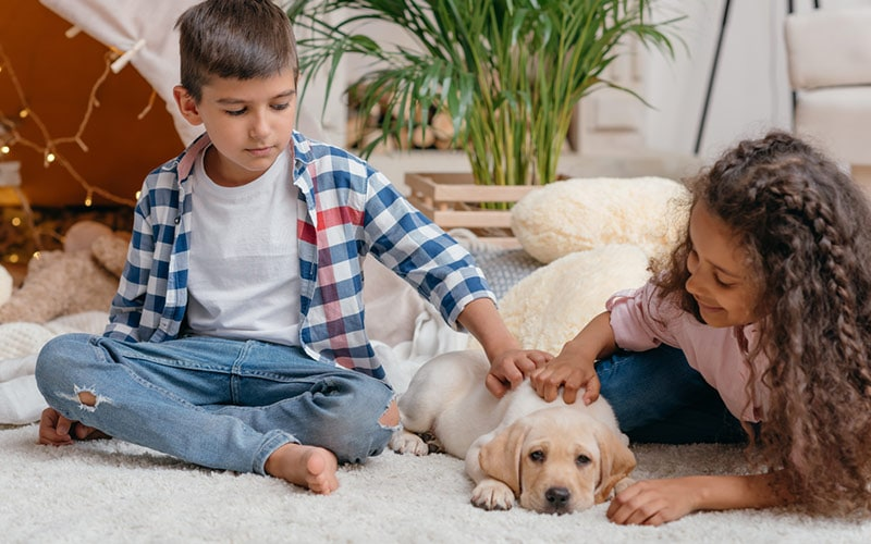10 Best Pet Recommendations For Kids Childfun