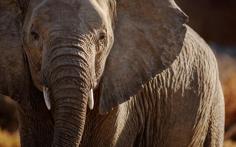 Elephants have long memories
